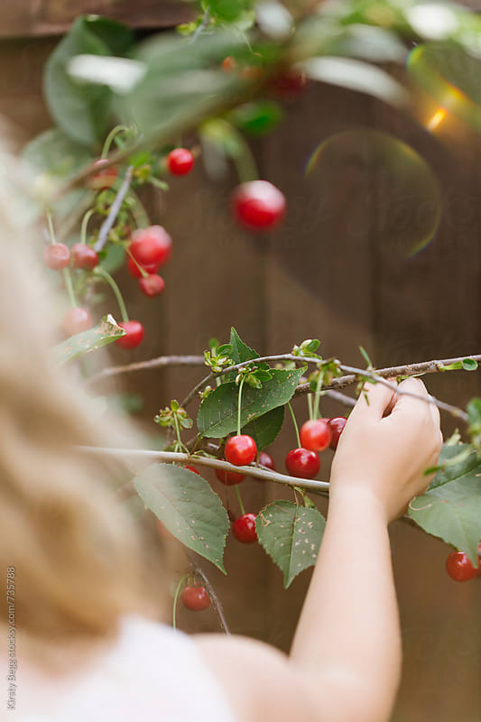 Girl picking a cherry from tree with sun flair by Kirsty Begg for Stocksy United