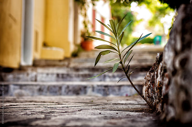 A plant on a street in Athens by Helen Sotiriadis for Stocksy United