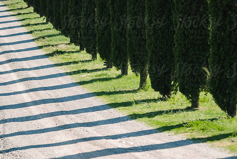 Country Road with Cypresses In Val D'Orcia, Tuscany by GIC for Stocksy United