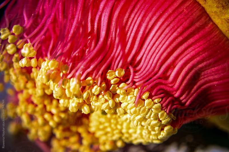 Australian Wild Flowers by Rowena Naylor for Stocksy United