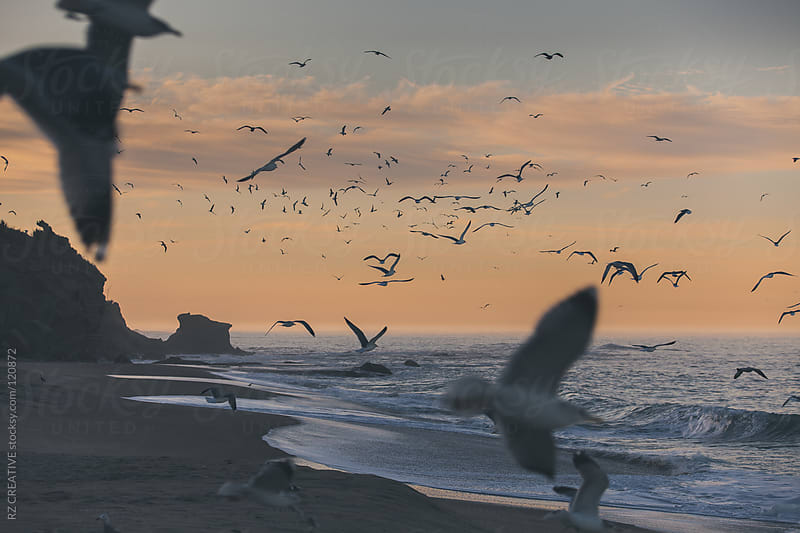 Seagulls in flight over the ocean on a muted fall morning. by RZ CREATIVE for Stocksy United