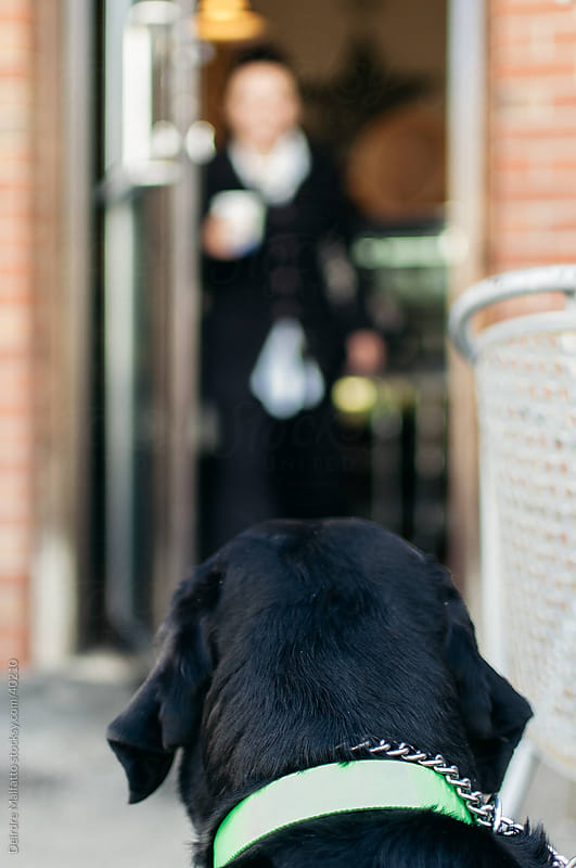 Dog waiting outside cafe for owner by Deirdre Malfatto for Stocksy United