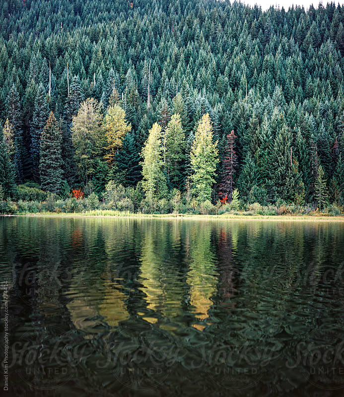 Calm lake and pine trees by Daniel Kim Photography for Stocksy United