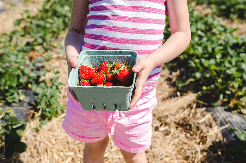 Child holding a basket of strawberries in a field by Lindsay Crandall for Stocksy United