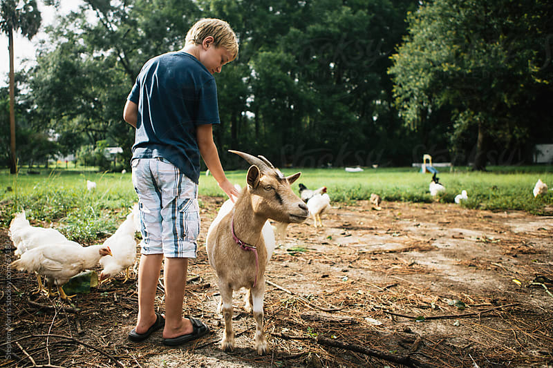 Boy Petting Goat in Barnyard by Stephen Morris for Stocksy United