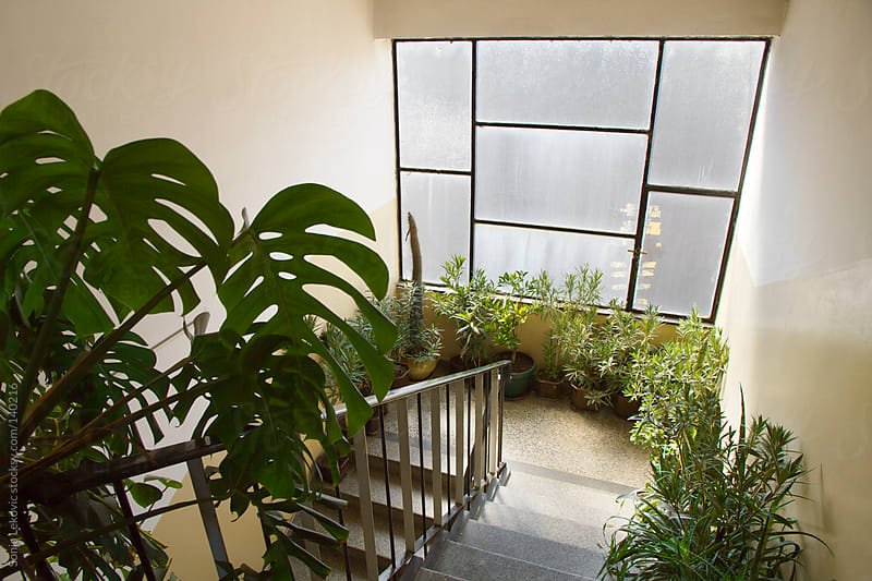interior with plants by Sonja Lekovic for Stocksy United