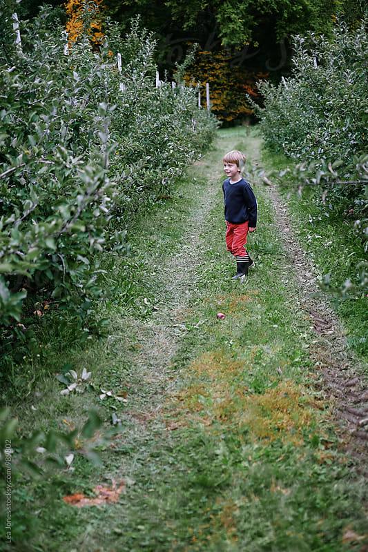 kid picking apples by Léa Jones for Stocksy United