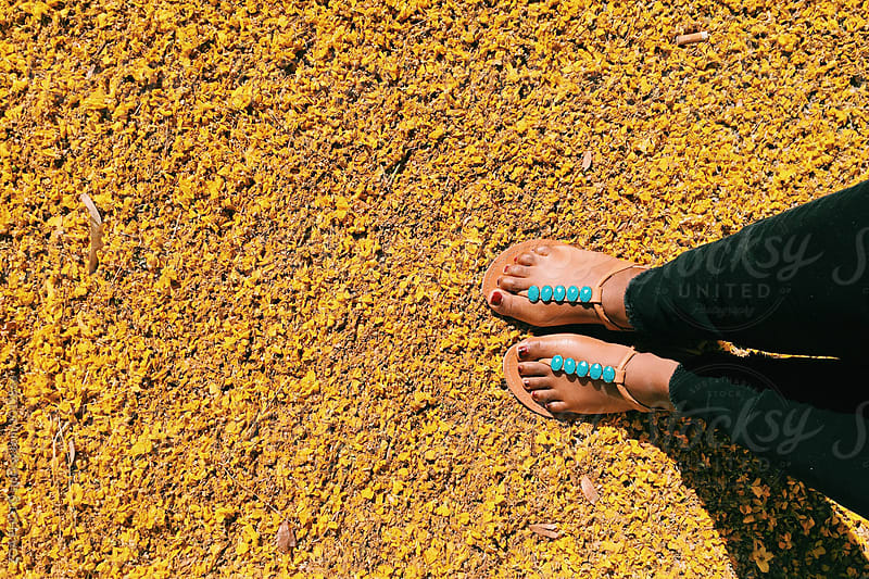 Brown feet in turquoise sandals on fallen yellow flowers by ZOA PHOTO for Stocksy United