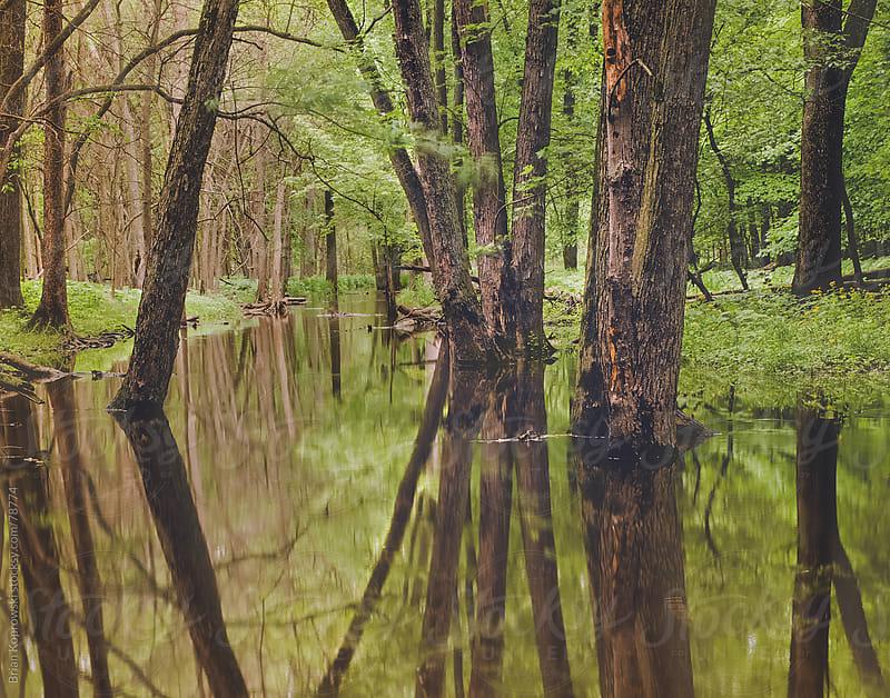 Mirror Creek by Brian Koprowski for Stocksy United