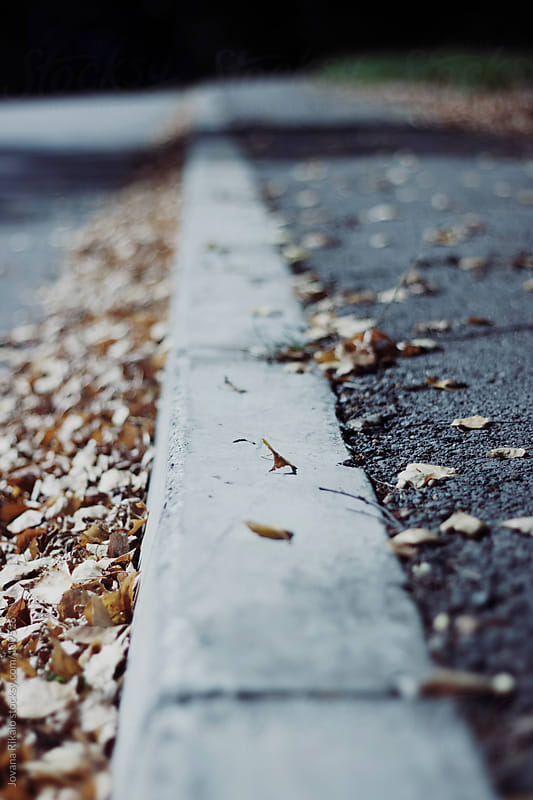 Autumn leaves on the street by Jovana Rikalo for Stocksy United