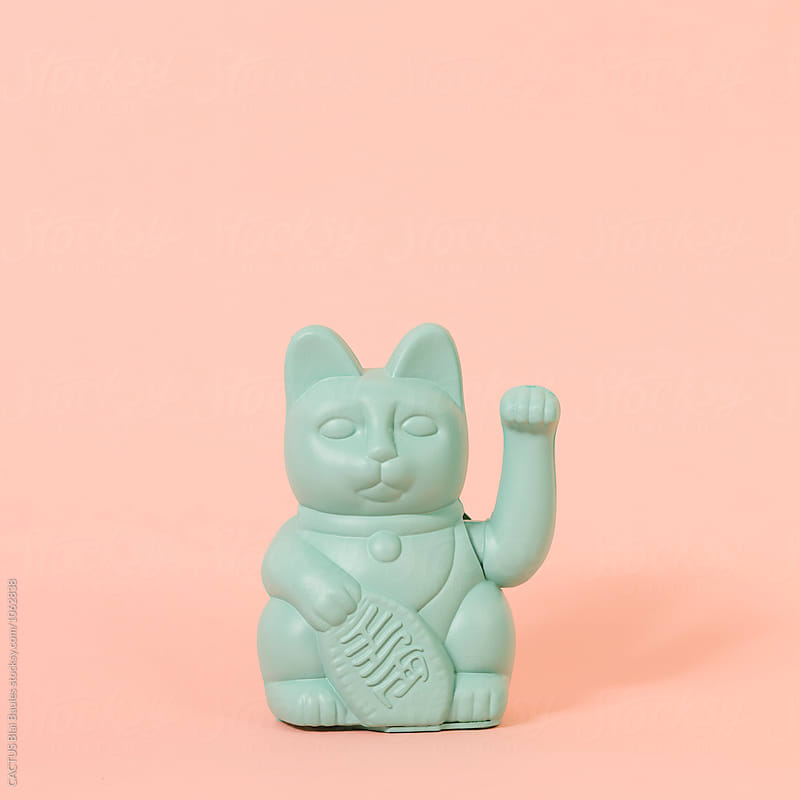 Chinese cat by Blai Baules for Stocksy United