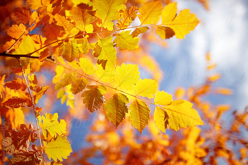 Vibrant fall colors by Marcel for Stocksy United