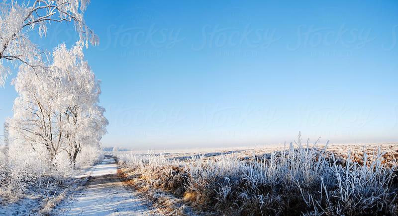 Heather landscape in winter by Harald Walker for Stocksy United