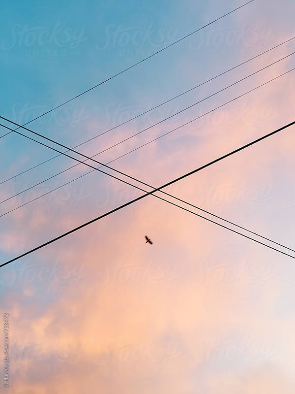 Bird Flying Between Wires at Sunset by B. Harvey for Stocksy United