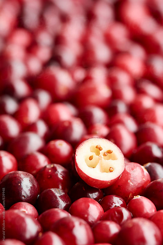 Fresh cranberries by Harald Walker for Stocksy United