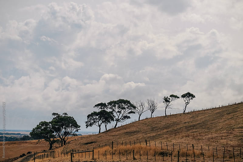 Australian Autumn Landscape by Rowena Naylor for Stocksy United