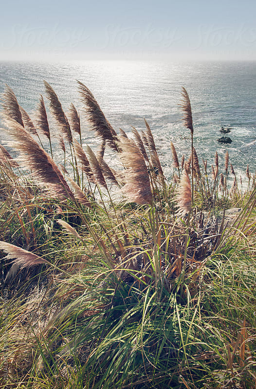 Reed Blowing in Wind by Ocean by VISUALSPECTRUM for Stocksy United