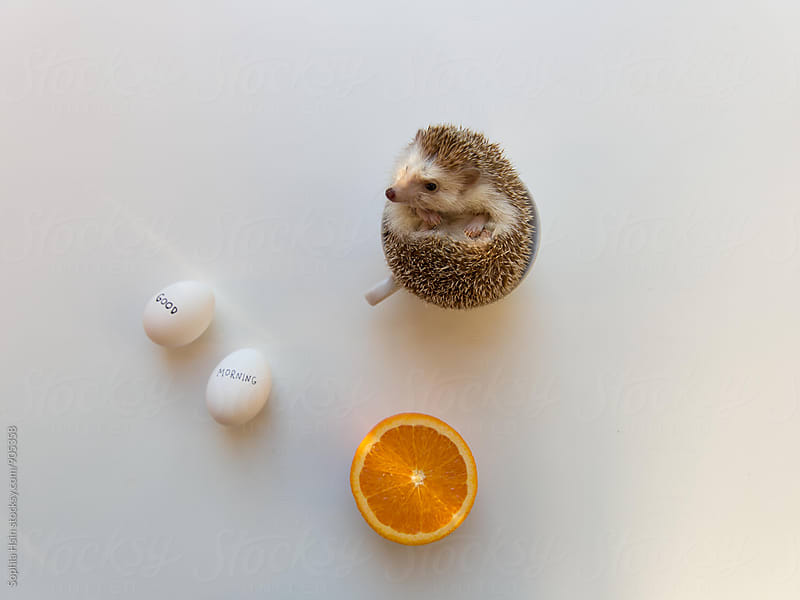 Good morning hedgehog in a cup by Sophia Hsin for Stocksy United