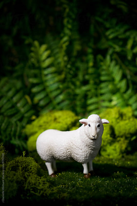 A lamb or sheep in the forest at night by J Danielle Wehunt for Stocksy United