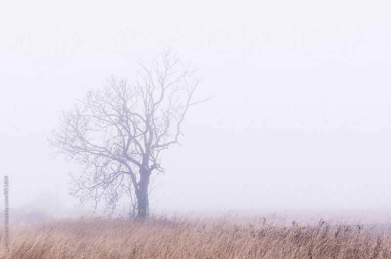 Tree in thick fog. Norfolk, UK. by Liam Grant for Stocksy United