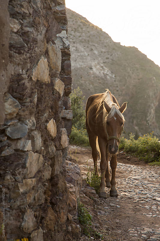 A horse in Mexico by Gary Parker for Stocksy United