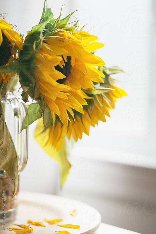 Bouquet Of Yellow Sunflowers by Kelli Seeger Kim for Stocksy United