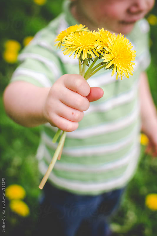 Child holding dandelions outdoors by Lindsay Crandall for Stocksy United