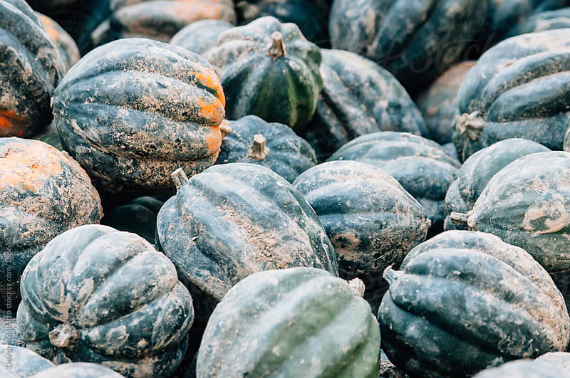 fresh harvested acorn squash background by Deirdre Malfatto for Stocksy United