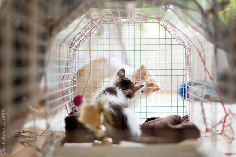 Cat kissing recovering kitten in a cage in bright living room by Laura Stolfi for Stocksy United