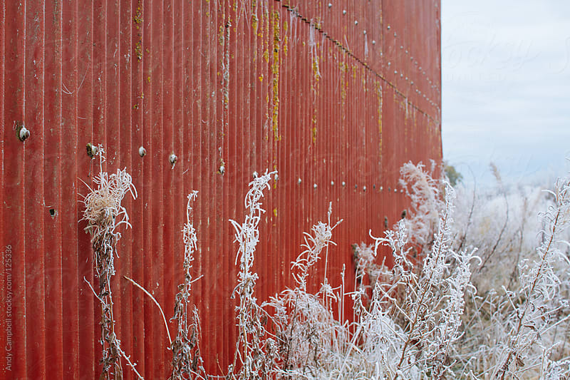 Frost covered weeds against a red barn by Andy Campbell for Stocksy United