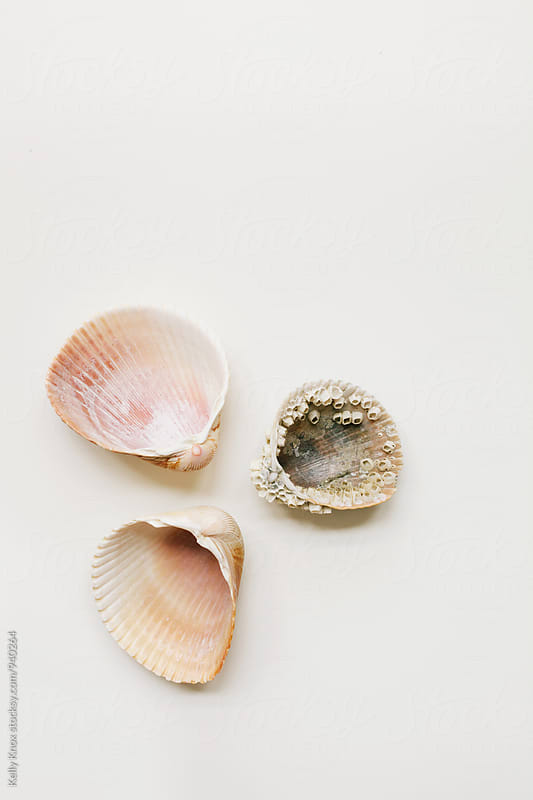 three cockle shells on white by Kelly Knox for Stocksy United
