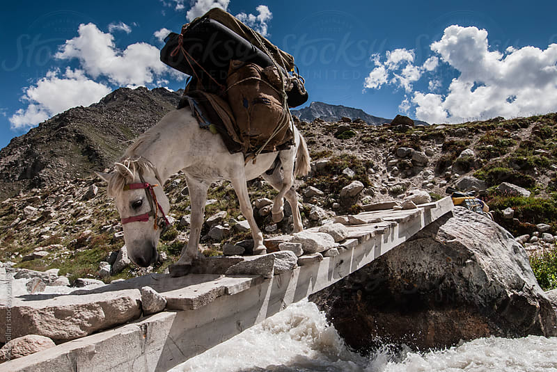 Pack horse crossing rustic wooden bridge over river by Mick Follari for Stocksy United