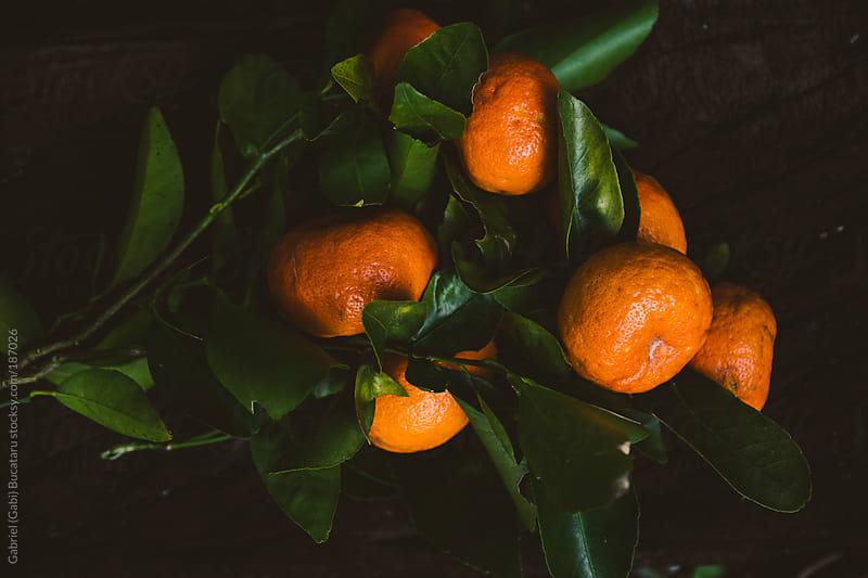 Wild Tangerines by Gabriel (Gabi) Bucataru for Stocksy United