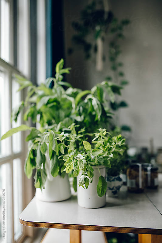 Green Plants by Hung Quach for Stocksy United