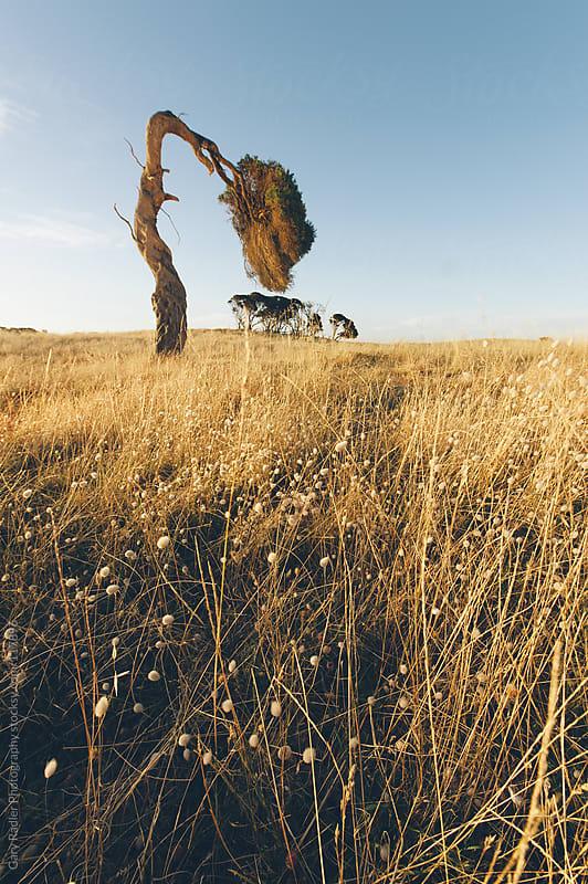 Windswept by Gary Radler Photography for Stocksy United