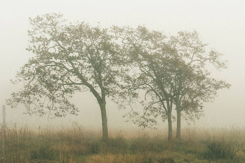 Foggy trees by Richard Brown for Stocksy United