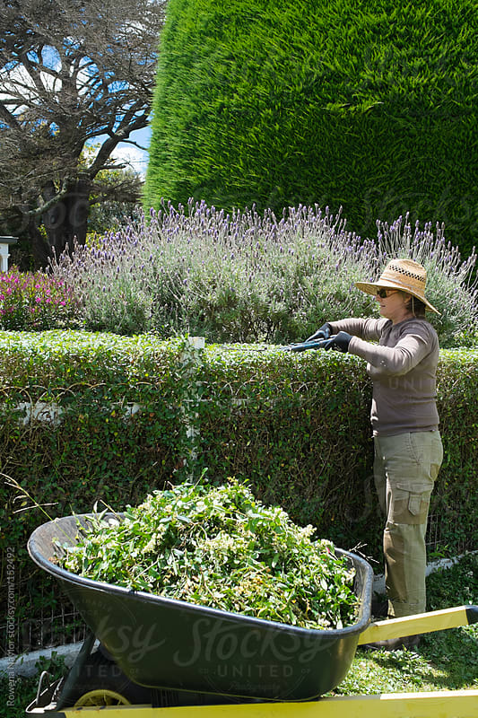 Gardener Trimming a Hedge by Rowena Naylor for Stocksy United