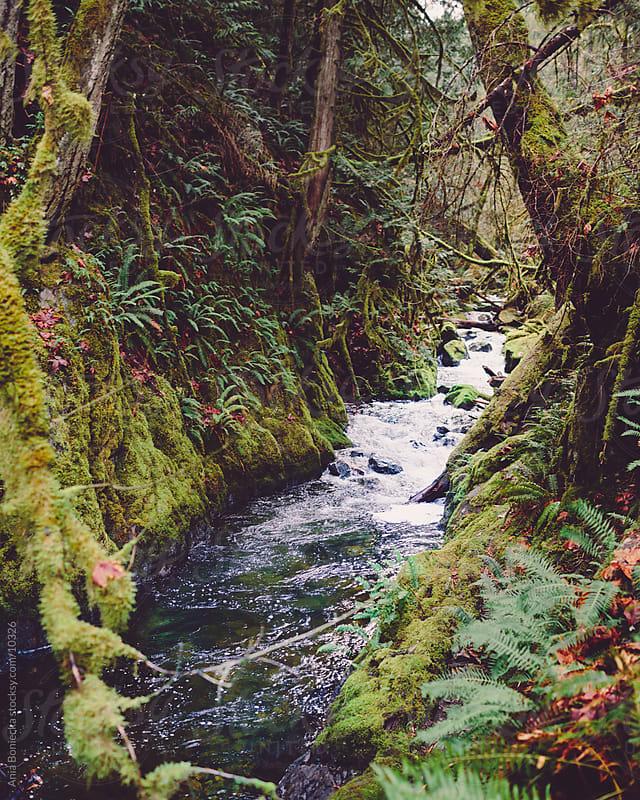 stream running through a forest by Ania Boniecka for Stocksy United