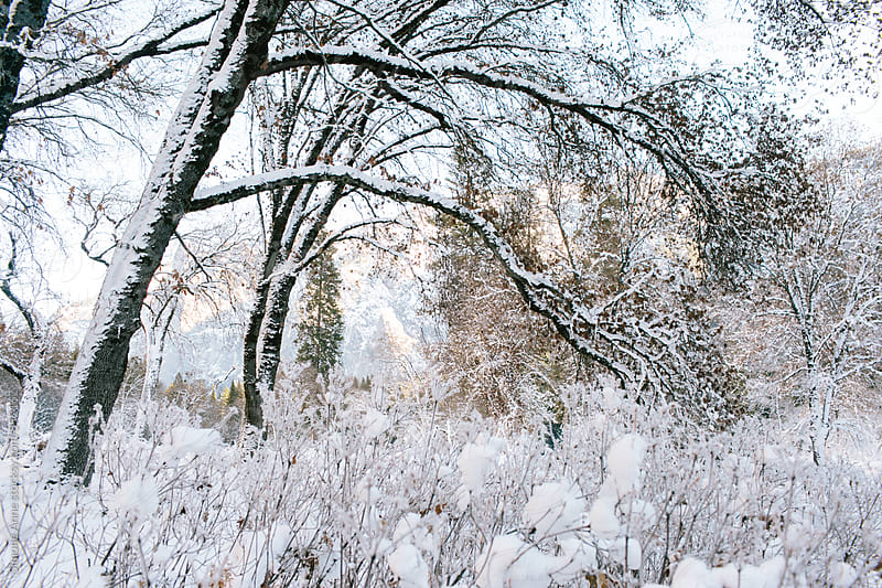 Snowy landscape with trees by Simone Anne for Stocksy United