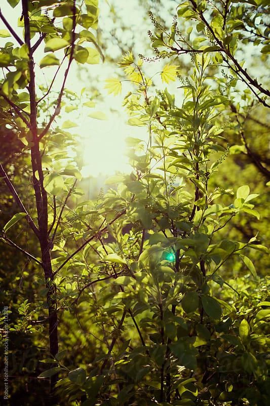 Green leaves by Robert Kohlhuber for Stocksy United