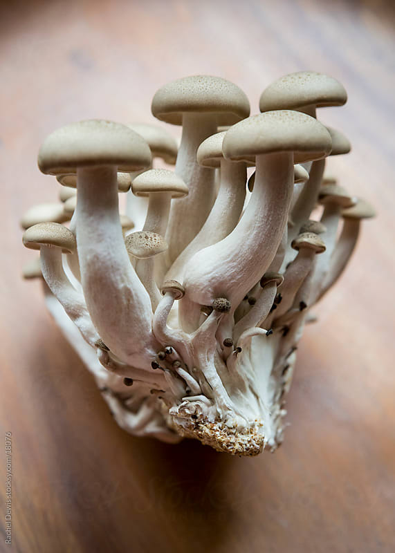 Oriental Japanese shimeji mushrooms. by Rachel Dewis for Stocksy United