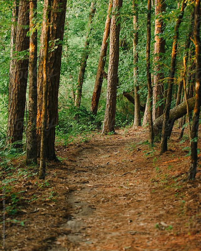 Pathway through forest by michelle edmonds for Stocksy United