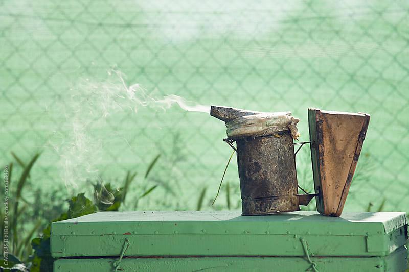 Smoke pot by CACTUS Blai Baules for Stocksy United