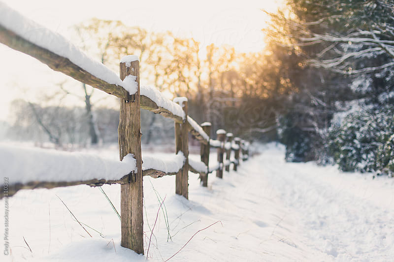 A wooden fence in the snow along a path during sunset by Cindy Prins for Stocksy United