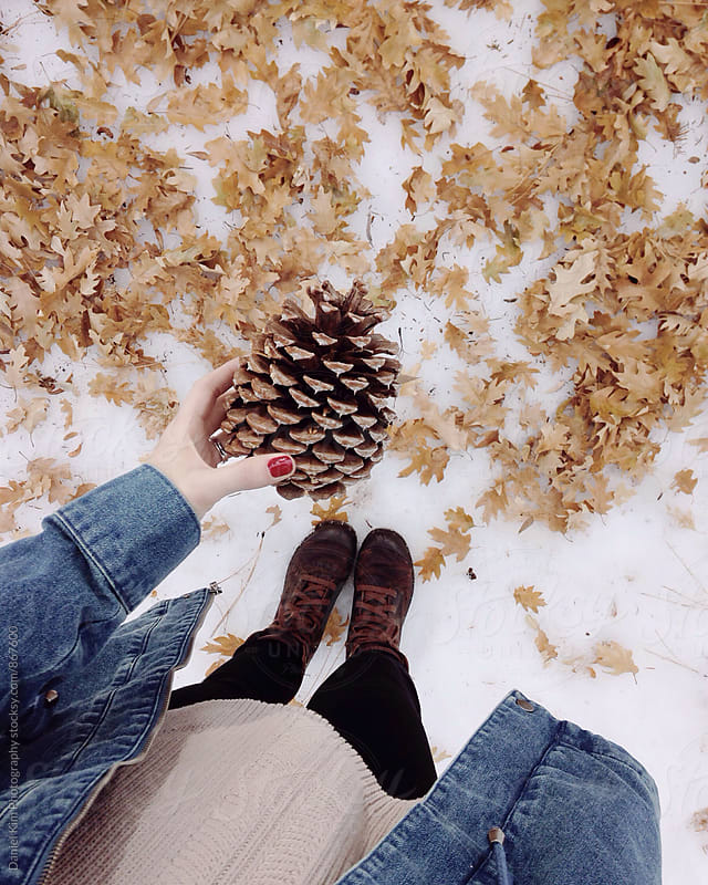 Hand holding pinecone by Daniel Kim Photography for Stocksy United