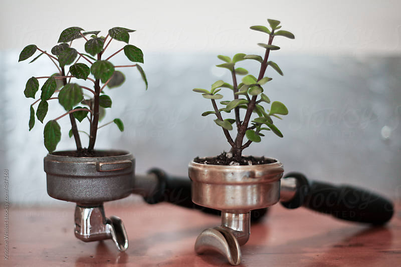 Plants Growing out of Espresso Portafilters by Kristine Weilert for Stocksy United