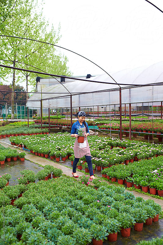 female florist working in the nursery by Bo Bo for Stocksy United