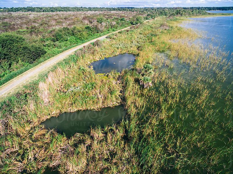Lake Apopka, Florida by Jen Grantham for Stocksy United