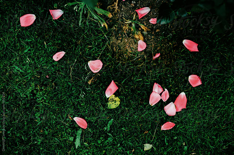 Rose petals on the grass by Dimitrije Tanaskovic for Stocksy United