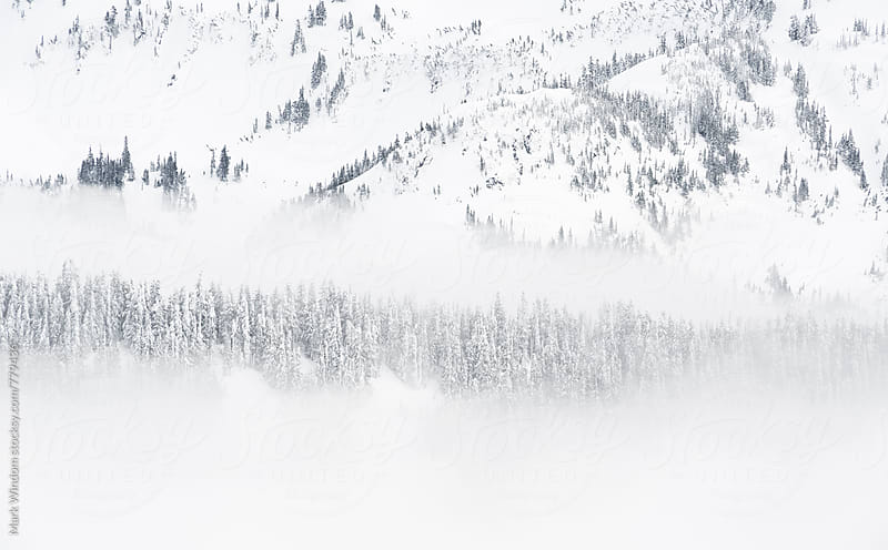 Fog among the trees in winter by Mark Windom for Stocksy United